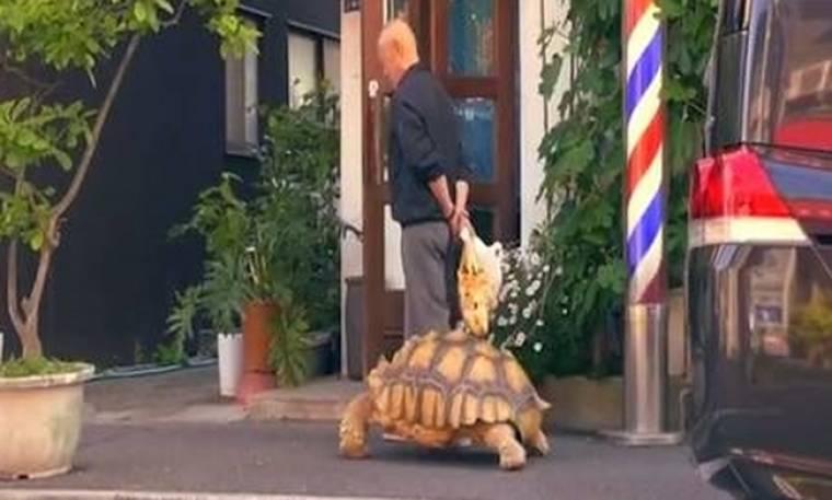 Ένας Ιάπωνας και η χελώνα του, το πιο viral ζευγάρι του διαδικτύου