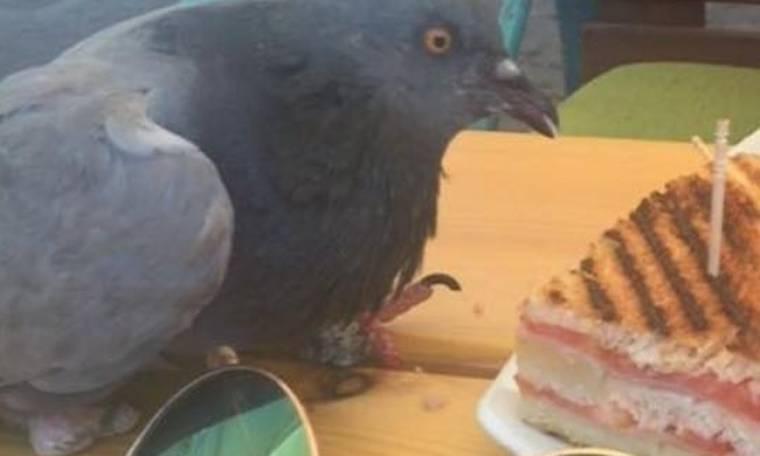 Τρελό Γέλιο: Παρήγγειλε ένα τοστ, αλλά άλλος το τρώει…