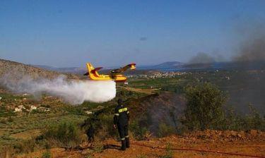 Διπλό πύρινο μέτωπο στην Εύβοια - 30 πυρκαγιές σε 12 ώρες