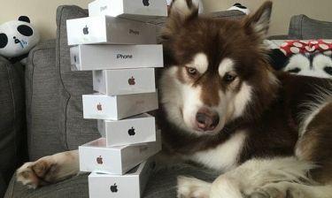 Κίνα: Αγόρασε οκτώ iPhone 7 για τον σκύλο του