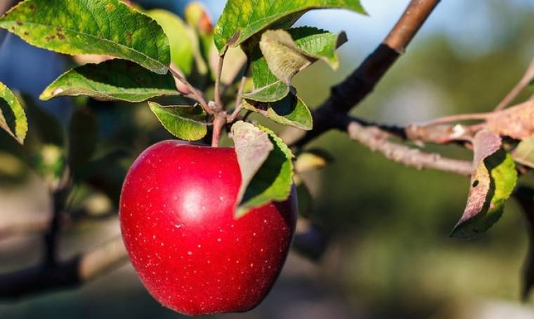 Ένα μήλο την ημέρα προστατεύει από 5 μορφές καρκίνου!