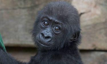 Οι πίθηκοι ξέρουν τι σκέφτεστε