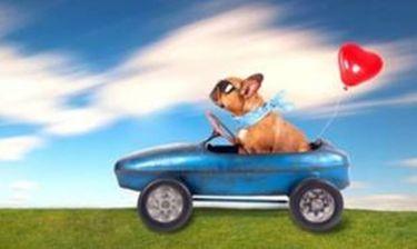 Τα 12 ζώδια ταξιδεύουν με το αυτοκίνητο