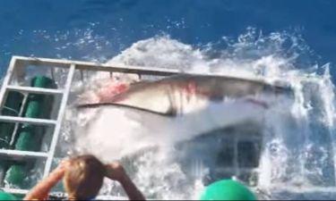 ΣΚΛΗΡΕΣ ΕΙΚΟΝΕΣ! Καρχαρίας έσπασε το κλουβί δύτη! (video)