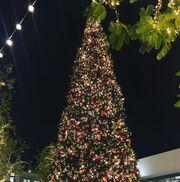 Ιωάννα Τριανταφυλλίδου: Το χριστουγεννιάτικο δέντρο στην Αμερική, που την εντυπωσίασε