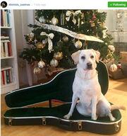 Η Χριστουγεννιάτικη φωτο του Σχοινά στο Instagram και η δημόσια γκρίνια της Γαρμπή