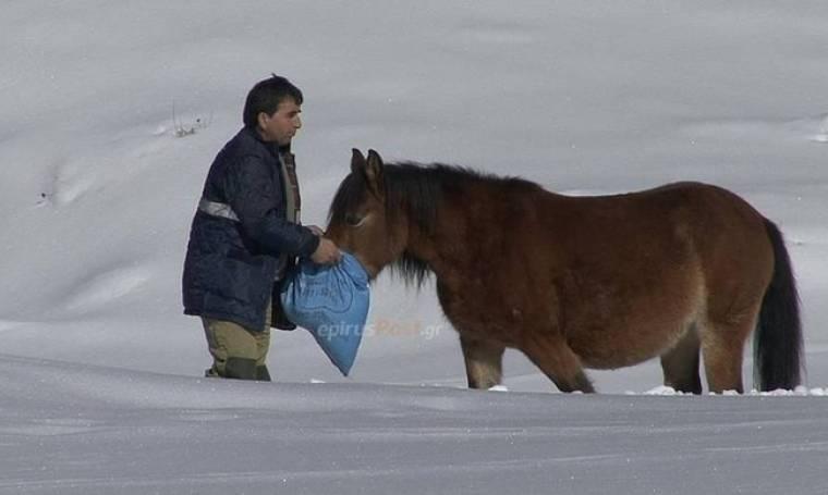 Εντυπωσιακές εικόνες από διάσωση αλόγων που εγκλωβίστηκαν στα χιόνια (pics)