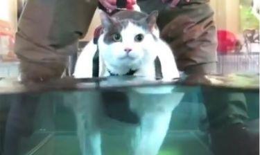Η γατούλα πηγαίνει σε ινστιτούτο αδυνατίσματος! (video)