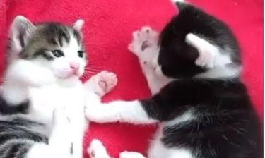 Το γατάκι χτυπάει το πατουσάκι του κατά τη διάρκεια του παιχνιδιού! Θα... λιώσετε!