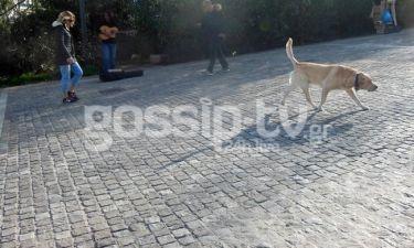 Βολτάροντας κάτω από την Ακρόπολη με τον... Γιαννάκη