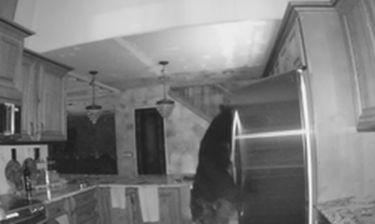 Αρκούδα εισβάλει σε σπίτι σε αναζήτηση... νυχτερινού σνακ