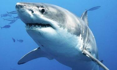 Προσοχή! Σ' αυτές τις παραλίες Ελλάδας και Ευρώπης θα σας επιτεθούν καρχαρίες