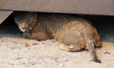 Συναγερμός στην Ιαπωνία από θάνατο 50χρονης μετά από δάγκωμα γάτας