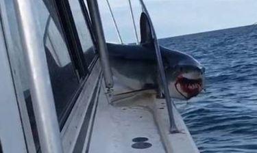 Γιγάντιος καρχαρίας παγιδεύεται πάνω σε σκάφος (vid)