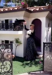 Τα σκυλάκια της Paris Hilton έχουν την δική τους βίλα αξίας…  275.000 ευρώ
