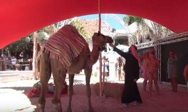 Μέχρι και… καμήλες στην συναυλία του Ρέμου με τους Ανατολίτες τραγουδιστές στο Nammos