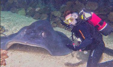 Έλληνας τραγουδιστής κολυμπά με... καρχαρίες