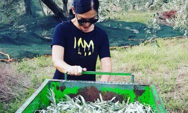 Η ερωτευμένη Ελένη Ψυχούλη μαζεύει ελιές στο Πήλιο