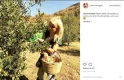 Η αγρότισσα Ελένη Μενεγάκη! Δείτε τη να μαζεύει μόνη της ελιές!