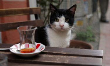 Οι γάτες της Κωνσταντινούπολης, της Ceyda Torun