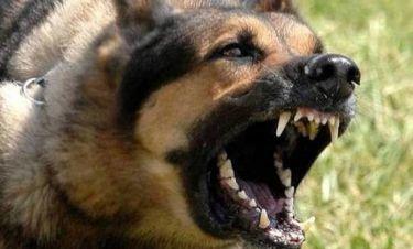 Σοκ στην Πάτρα: Σκύλος δάγκωσε δύο μικρά παιδιά