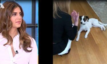 Η Στεφανίδου εκπαιδεύει τον σκύλο της στα αγγλικά – Δείτε πως αντέδρασαν στο Happy Day