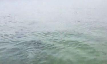 Μπήκε με το άλογό του στη θάλασσα, όταν ξαφνικά εμφανίστηκαν μπροστά τους... (video)