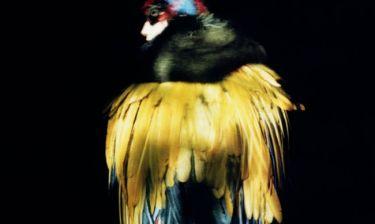 Dior: η αιθέρια ιστορία του οίκου μέσα από το βλέμμα του Paolo Roversi