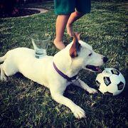 Κατερίνα Παπουτσάκη: Τα παιχνίδια του γιου της με τον σκύλο τους