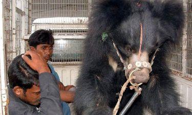 Ινδία: Αρκούδα κατασπάραξε άντρα που επιχείρησε να... βγάλει selfie μαζί της