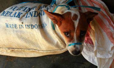 Αποτρόπαιο & επικίνδυνο: το Χόλιγουντ αντεπιτίθεται στο εμπόριο κρέατος σκύλου