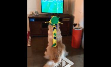 Αυτό το σκυλάκι είναι ο μεγαλύτερος οπαδός της Βραζιλίας!