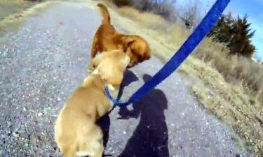 Θα… λιώσετε! Σκυλίτσες, μαμά και κόρη, συναντιούνται μετά από καιρό!