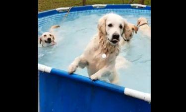 Λατρεμένοι ήρωες σε… πισίνα πάρτι!