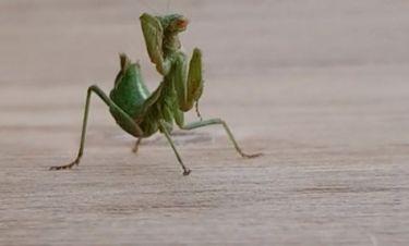 Κι όμως το είδαμε κι αυτό! Έντομο φτιάχνεται μπροστά στην κάμερα!