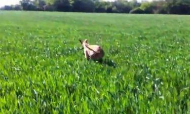 Τρελό γέλιο! Δείτε τον σκύλο… καγκουρό!