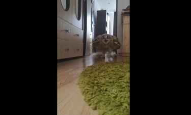 To video της ημέρας! Η πιο απίθανη κουκουβάγια που έχετε δει ποτέ!