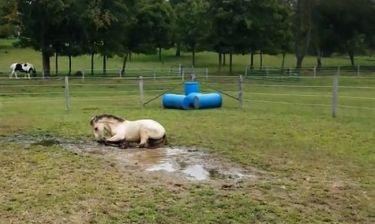 Αυτό το άλογο τρελαίνεται για τις λάσπες