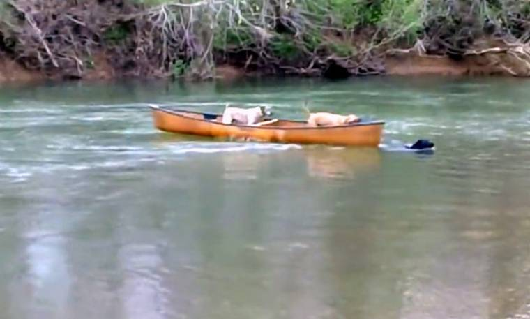 Απίστευτο: Σκύλος σώζει δύο άλλα σκυλιά που παρασύρονταν από το ποτάμι!