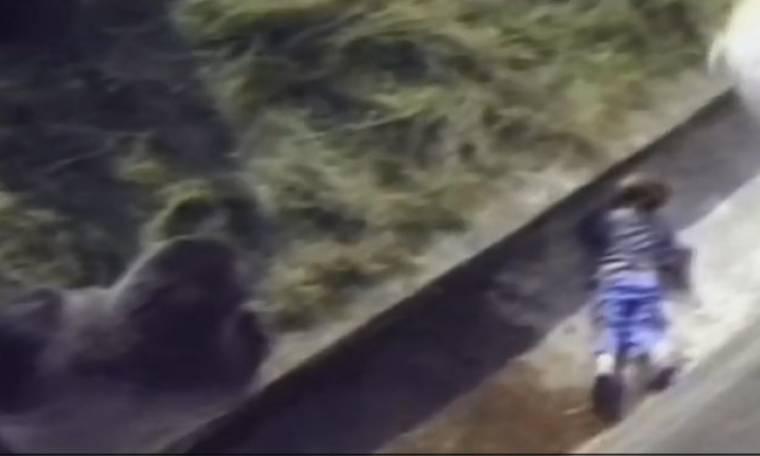 Δείτε τι συνέβη όταν ένα 5χρονο αγόρι έπεσε στον λάκκο με γορίλες
