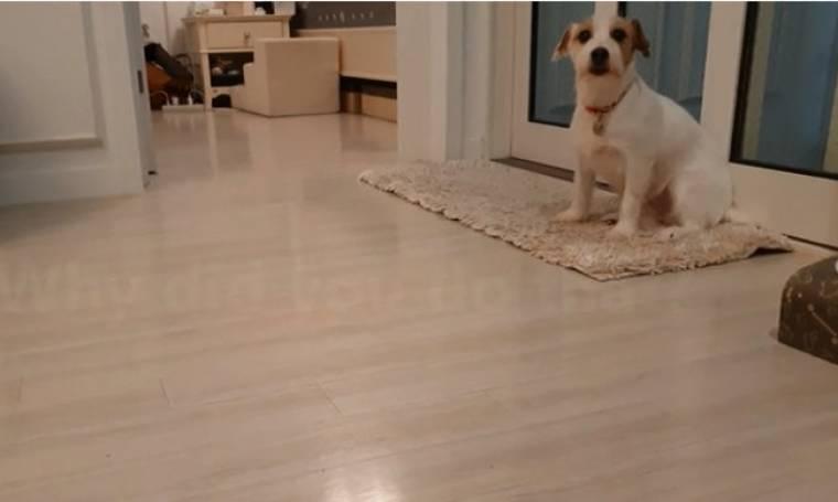 Αυτό το σκυλί γνωρίζει την ενοχή του- Δείτε τι κάνει