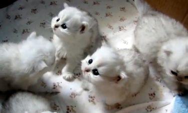 Αυτά τα γατάκια θα σας κάνουν να... λιώσετε!