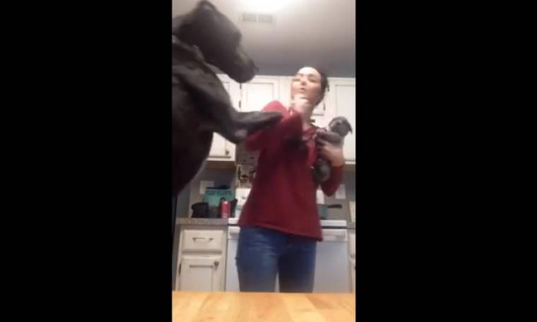 Τι κάνει ένας σκύλος όταν ζηλεύει ένα κουτάβι;