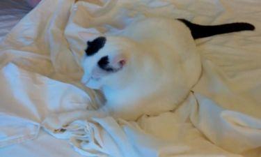 Ο γάτος που... αρνείται να σηκωθεί από το κρεβάτι!