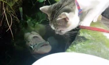 Τι συμβαίνει όταν μια γάτα πίνει νερό και ακριβώς από κάτω βρίσκεται ένα ψάρι; (vid)