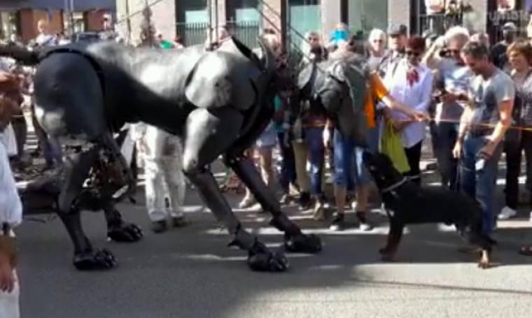 Πολύ γέλιο: Όταν ένα ροντβάιλερ έρχεται αντιμέτωπο με έναν τεράστιο σκύλο!
