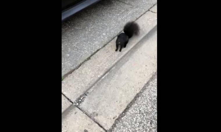 Αυτός ο αξιολάτρευτος σκίουρος πιάνει «ψιλή» κουβέντα στο δρόμο!