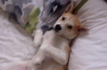 Αυτός ο σκύλος θέλει να κοιμάται συνέχεια!