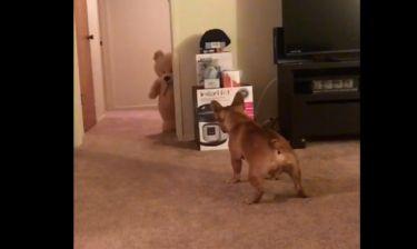 Κι όμως, αυτός ο σκύλος φοβάται το αρκουδάκι