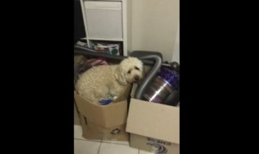 Θα λιώσετε! Δείτε τι κάνει ο σκύλος μέσα στο χαρτόκουτο!